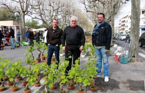 Sanary animations la foire aux plants 2014 un petit - Pied de vigne en pot ...