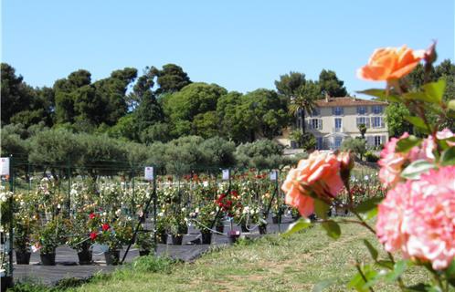 ollioules horticulture la rose de brignac un paradis 100 roses. Black Bedroom Furniture Sets. Home Design Ideas